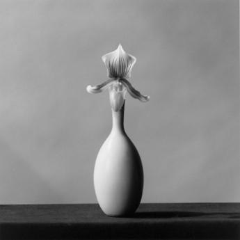 919_Orchid_1982web0