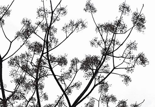 ddays-2016-arbre-eric-gizard-1