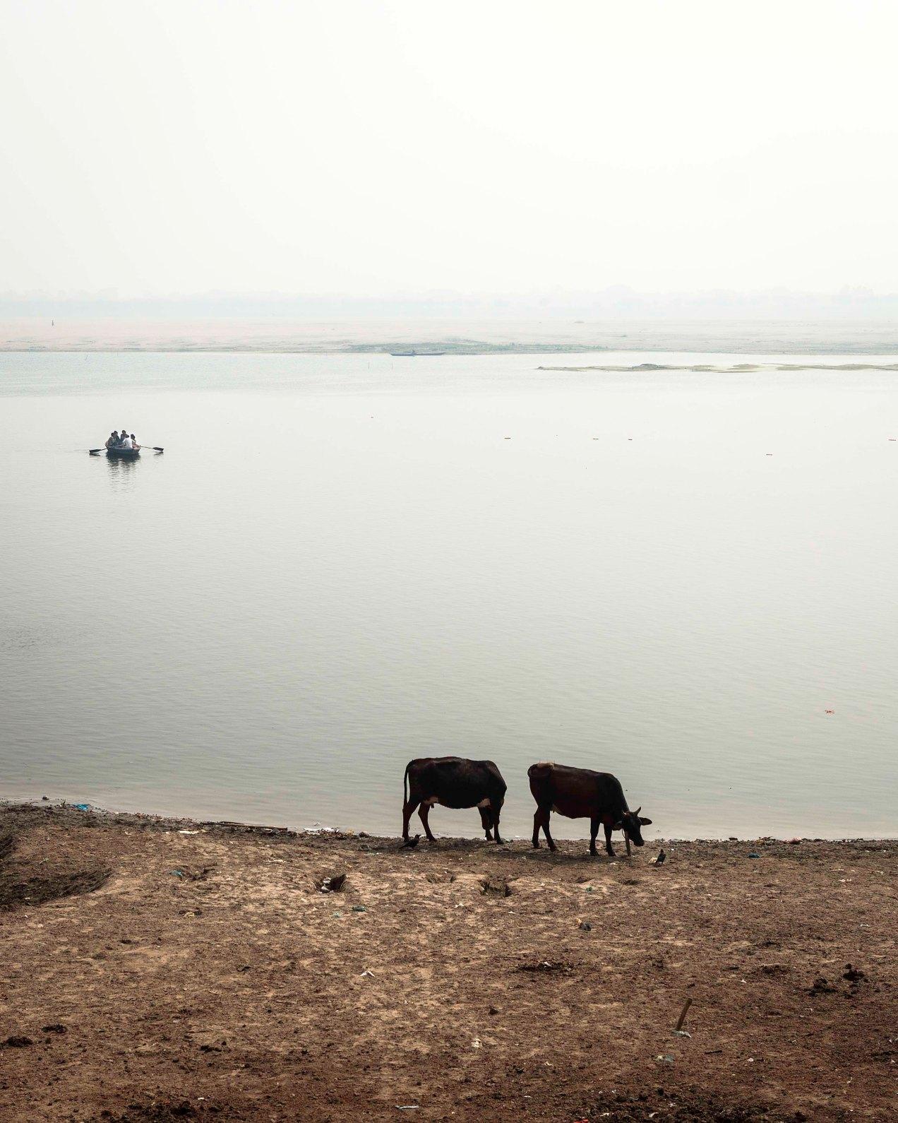 Le Gange, Varanasi, gildalliere, 2008