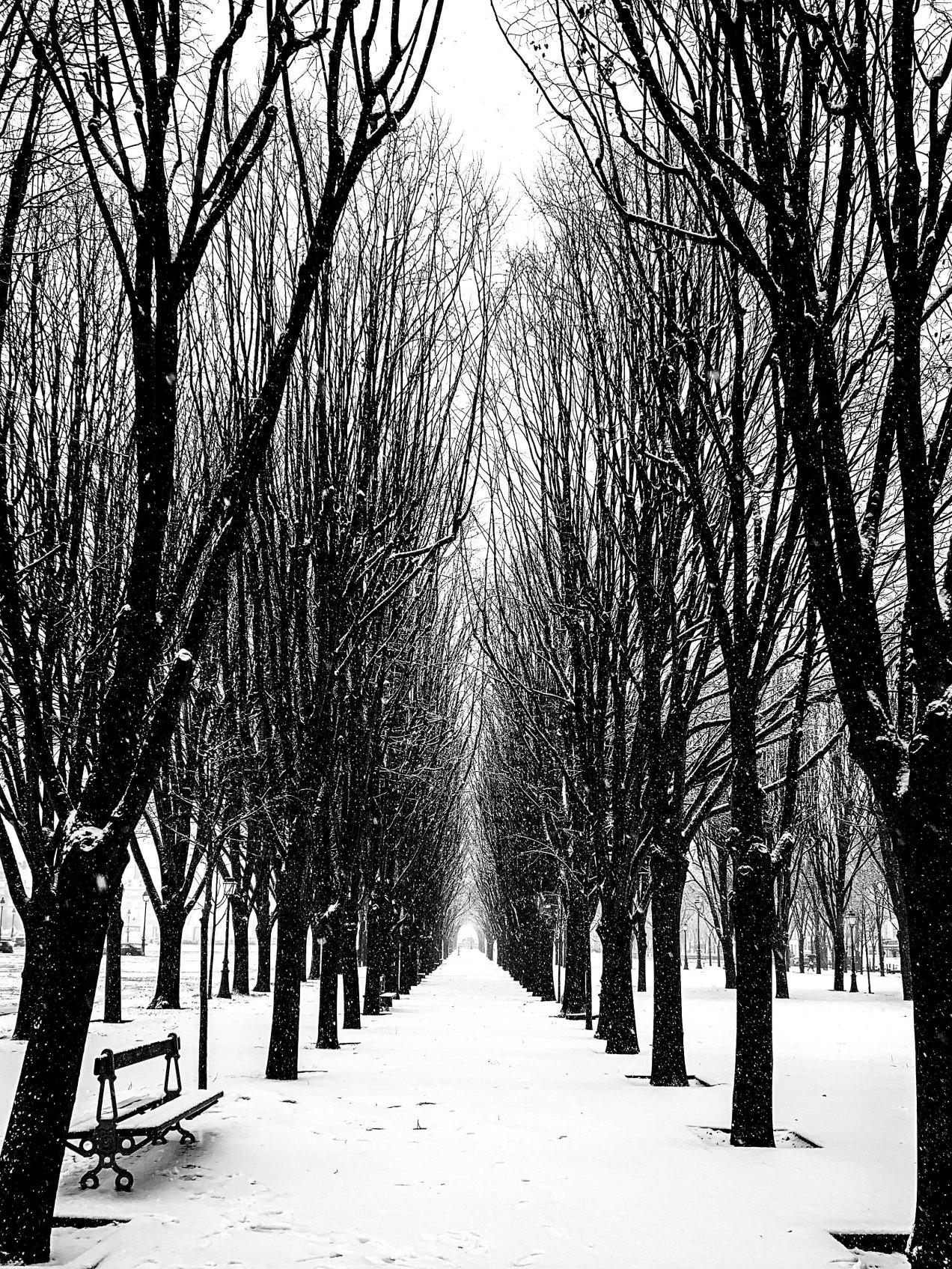 Paris sous la neige, gildalliere, 2019
