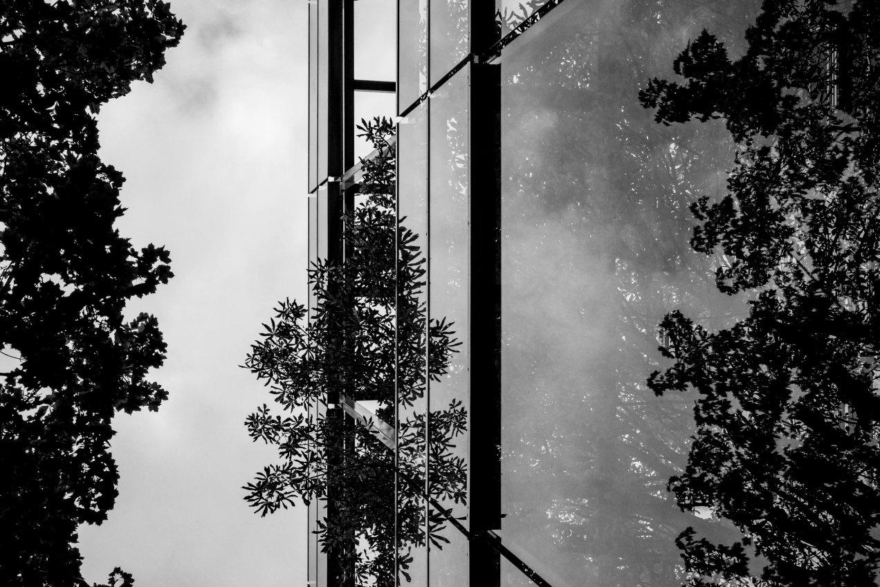 Fondation Cartier, Nous les arbres, Paris, gildalliere, 2019