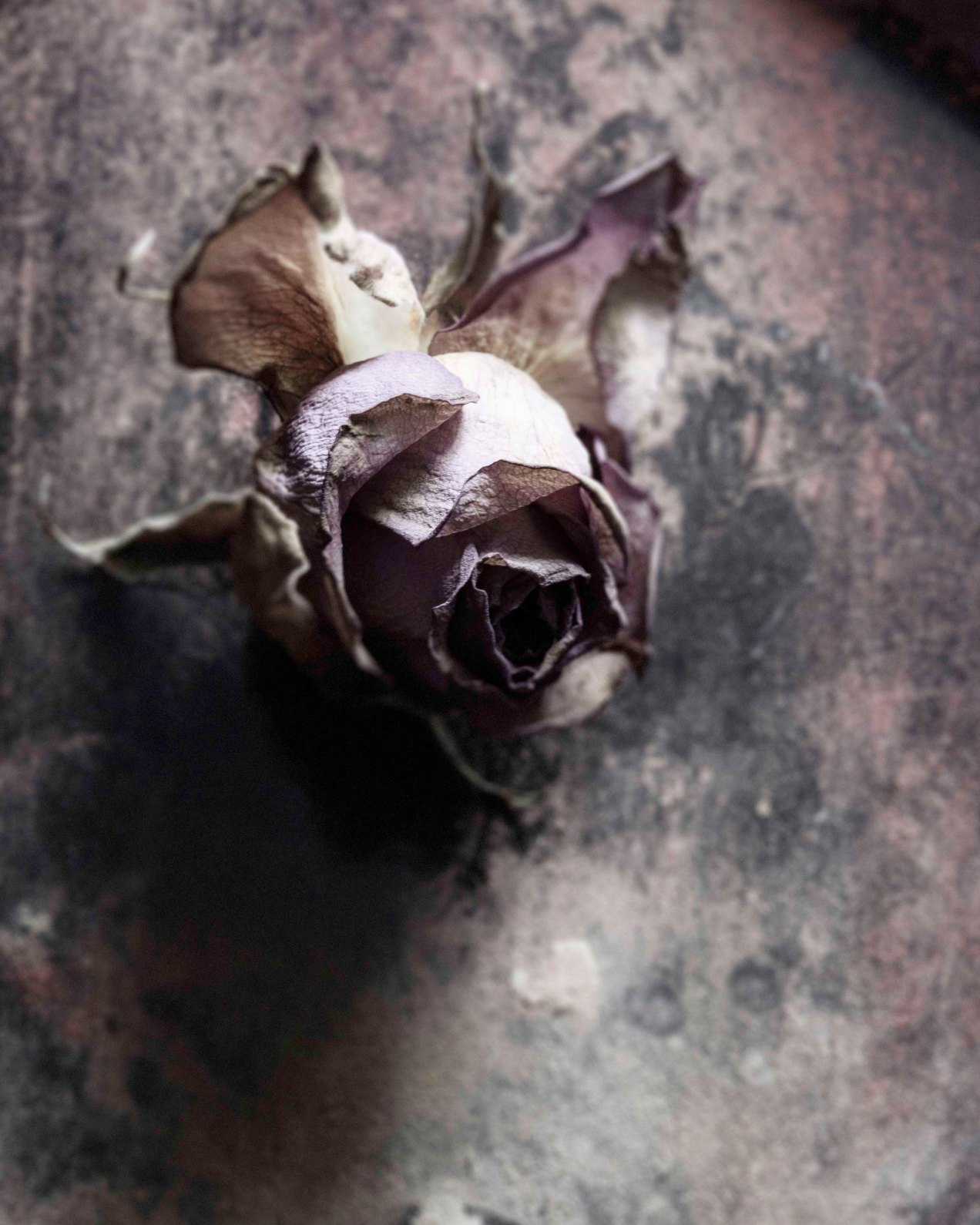 Rose, nature morte, gildalliere, Paris, 2011
