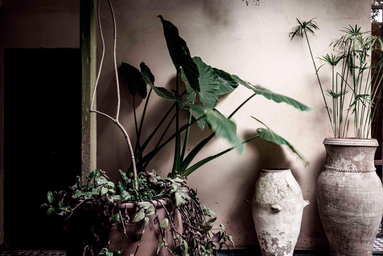 La cour, le jardin des Biehn, Fès, Maroc, gildalliere, 2020