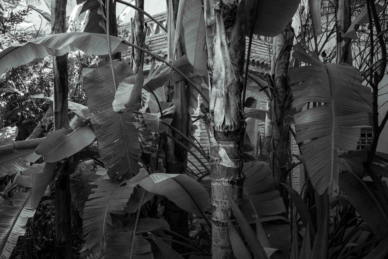 Le jardin des Biehn, jungle, Fès, Maroc, gildalliere, 2020