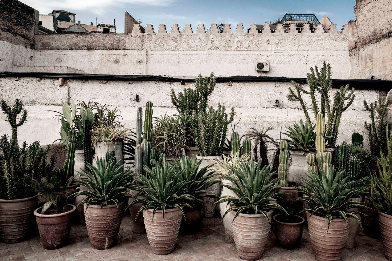 La terrasse, jardin des Biehn, Fès, Maroc, gildalliere, 2014