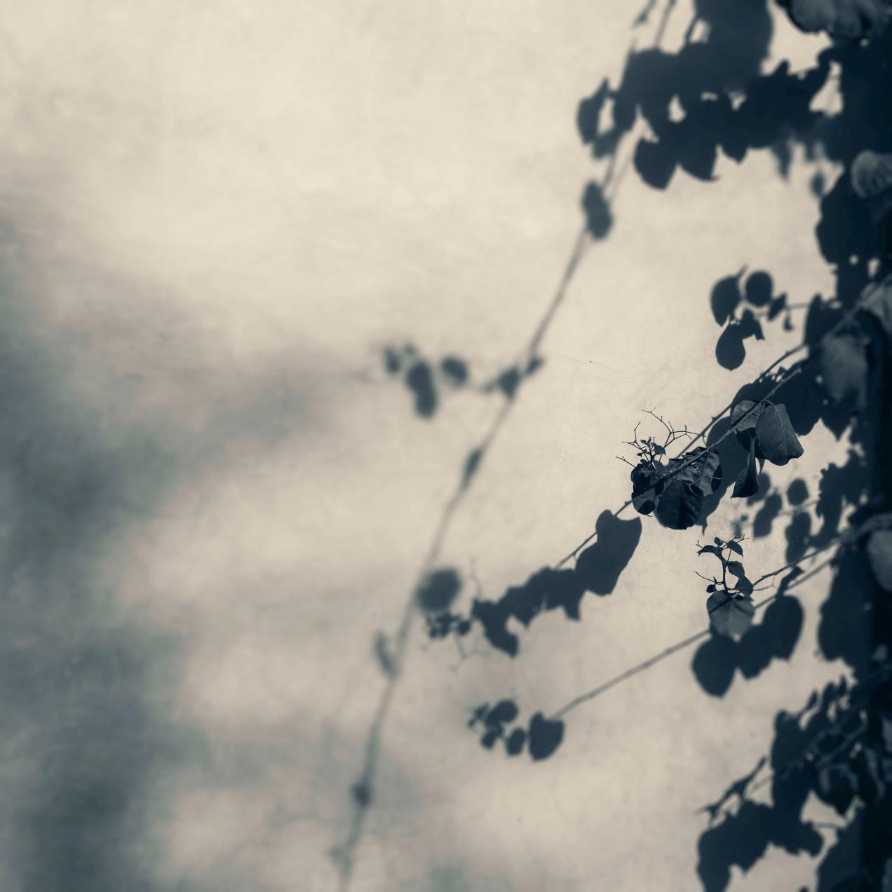 Ombre, portée sur le mur du jardin des Biehn, Fès, Maroc, gildalliere, 2020